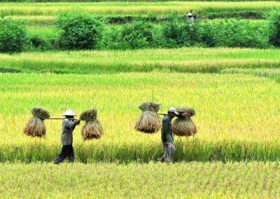 וייטנאם – אז, היום ומה שביניהם