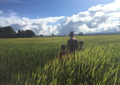 rice fields1