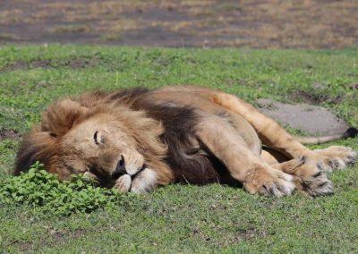 טנזניה – אנשים, חיות ומה שביניהם